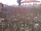Real estate in Bulgaria. Plot in Tsarichino, just 3 km. from Balchik.