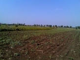 Agriculture land 3km from Balchik