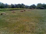 Bulgarian Property - Regulated plot in Sokolovo village